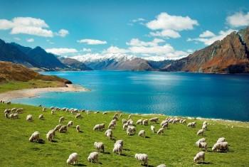 Visa New Zealand công tác